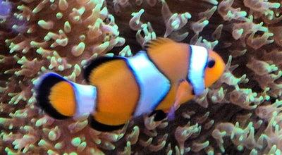 Photo of Aquarium Aquário de Itaquera at Av. Nova Trabalhadores, 3500, São Paulo, Brazil