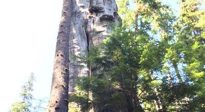 Photo of Other Great Outdoors Quinalt Big Cedar at Amanda Park, WA 98526, United States
