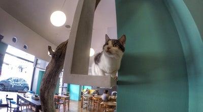Photo of Food Crazy Cat Cafe at Via Napo Torriani 5, milano, Italy