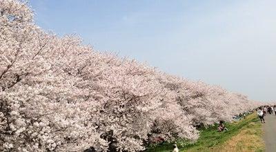 Photo of Park 熊谷桜堤 at 河原町2丁目173, 熊谷市, Japan