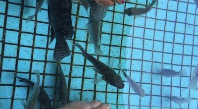Photo of Water Park Fish Spa at Manila Ocean Park, Manila, Philippines