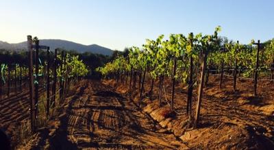 Photo of Winery Bernardo Winery at 13330 Paseo Del Verano Norte, San Diego, CA 92128, United States