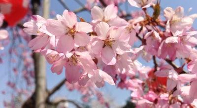 Photo of Park 西公園 (桜ヶ岡公園) at 青葉区桜ケ岡公園1-3外, 仙台市 980-0823, Japan
