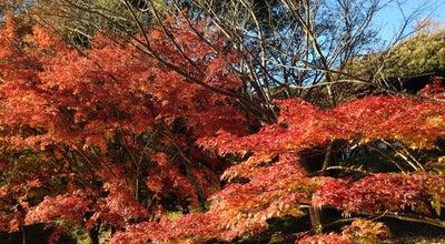Photo of Lake こどもの国 白鳥湖 at 青葉区奈良町700, Yokohama 227-0036, Japan