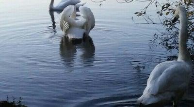 Photo of Lake Southards Pond at 9 Willow St, Babylon, NY 11702, United States