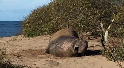 Photo of Zoo Elephant Seal Beach at San Simeon, CA 93452, United States