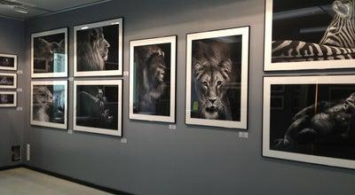 Photo of Art Gallery Brucie Collection at Вул. Січових Стрільців, 55-б, Київ 04053, Ukraine