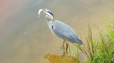 Photo of Lake Bass Lake at Holly Springs, NC 27540, United States
