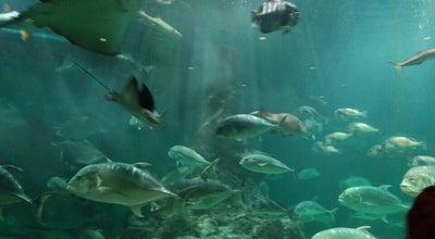 Photo of Aquarium 和歌山県立自然博物館 at 船尾370-1, 海南市 642-0001, Japan