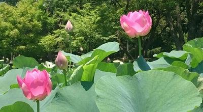 Photo of Lake 綿打池 at 中央区弁天3-1-1, 千葉市, Japan