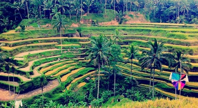 Photo of Scenic Lookout Tegallalang Rice Terraces at Jalan Raya Tegalalang, Gianyar, Indonesia