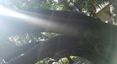 Photo of Monument / Landmark Banyan Tree Park at Front Street, Lahaina, HI 96761, United States