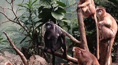 Photo of Zoo JungleWorld at The Bronx Zoo, New York, NY 10460, United States