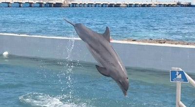 Photo of Zoo Dolphin Discovery at Costa Maya, Mexico