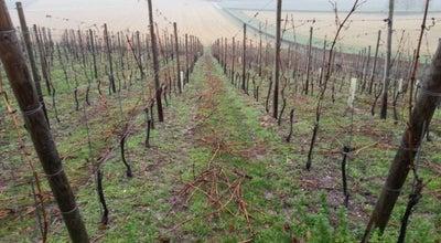 Photo of Winery De Apostelhoeve at Susserweg 201, Maastricht 6213 NE, Netherlands