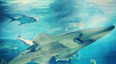 Photo of Aquarium Tropicarium at Campona, Budapest 1225, Hungary