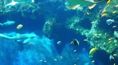Photo of Zoo Aquarium du Grand Lyon at 20 D486, La Mulatière 69350, France
