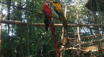 Photo of Park Bosque dos Jequitibás at R. Cel. Quirino, 2, Campinas, Brazil