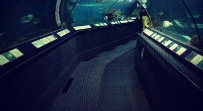 Photo of Aquarium Shanghai Ocean Aquarium at 1388 Lujiazui Ring Rd., Shanghai, Sh 200120, China