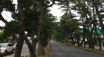 Photo of Trail 旧東海道松並木 at Japan
