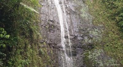 Photo of Trail Mānoa Falls at Manoa Rd., Honolulu, HI 96822, United States