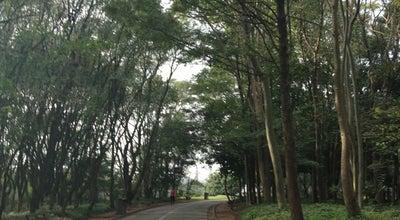 Photo of Trail Pista de Caminhada at Av. Fonseca Rodrigues (na Altura Do Parque Villa Lobos Até Av. Pedroso De Morais), São Paulo, Brazil
