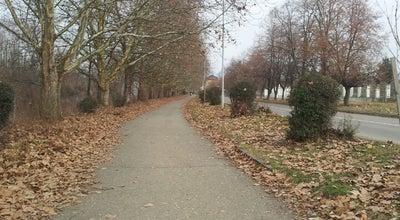 Photo of Trail Алея Платанів / Platanus Alley at Наб. Слов'янська, Ужгород 88000, Ukraine