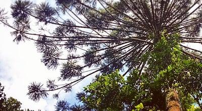 Photo of Trail Parque Estadual Cantareira at Brazil