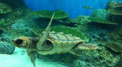 Photo of Aquarium 新潟市水族館 マリンピア日本海 at 中央区西船見町5932-445, 新潟市 951-8101, Japan