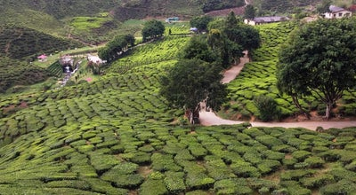 Photo of Tea Room Bharat Tea Plantation at Cameron Highlands, Malaysia