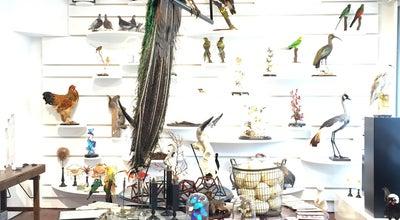 Photo of Pet Store Taxidermy at Roelof Hartstraat 80, Amsterdam, Netherlands