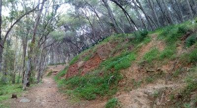 Photo of Trail Subida al Monte Calvario at Spain