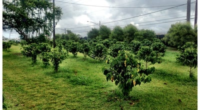 Photo of Coffee Shop Green World Farms at 71-101 N Kamehameha Hwy, Wahiawa, HI 96786, United States