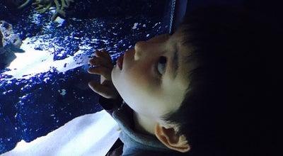 Photo of Aquarium 아쿠아플라넷 일산 at 일산서구 한류월드로 282, Goyang-si 10392, South Korea