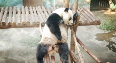 Photo of Zoo 红山森林动物园 Hongshan Forest Zoo at 168 Heyan Rd, Nanjing, Ji 210028, China