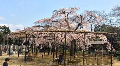 Photo of Temple 原木山妙行寺 at 原木1-24-1, 市川市, Japan
