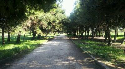 Photo of Trail Balcı Çamlığı Yürüyüş Parkuru at Bandırma, Turkey