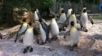Photo of Zoo Birdland at Rissington Rd., Bourton-On-The-Water GL54 2BN, United Kingdom