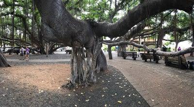 Photo of Park Banyan Tree Park at 658 Wharf St, Lahaina, HI 96761, United States