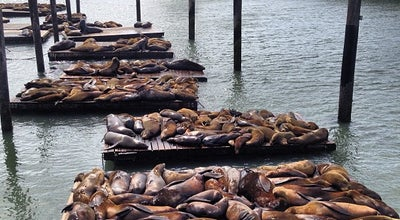 Photo of Scenic Lookout Sea Lions at Pier 39 at 39s Marina Blvd, San Francisco, CA 94111, United States