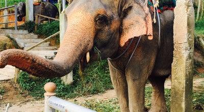 Photo of Racetrack Elefant Traking at Nanai Rd, Kathu 83150, Thailand