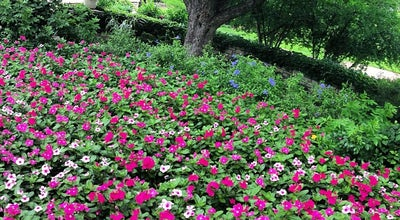 Photo of Botanical Garden Fort Worth Botanic Garden at 3220 Botanic Garden Blvd, Fort Worth, TX 76107, United States