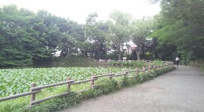 Photo of Lake 菊名池公園 at 港北区菊名1-8-1, 横浜市 222-0011, Japan