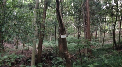 Photo of Trail トトロの森1号地 at 上山口雑魚入351, 所沢市, Japan