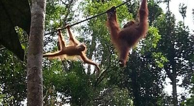 Photo of Trail Semenggoh Nature Reserve at Malaysia