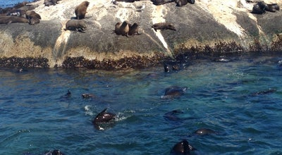 Photo of Beach Seal island hout bay at Hout Bay, Cape Town, Cape Town, South Africa