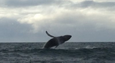 Photo of Other Great Outdoors North Sailing - Husavik Original Whale Watching at Hafnarstett 11, Husavik 640, Iceland
