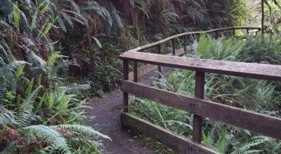 Photo of Trail Rain Forest Nature Trail at Amanda Park, WA 98526, United States