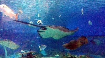 Photo of Water Park Oceanarium at Manila Ocean Park, Manila, Philippines, Philippines