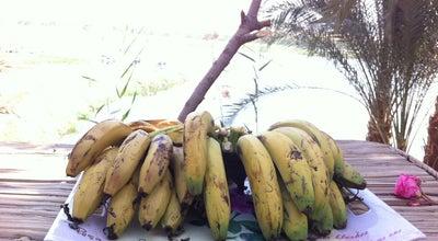 Photo of Farm Banana Island at Egypt